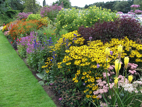 herbaceous border plants uk images