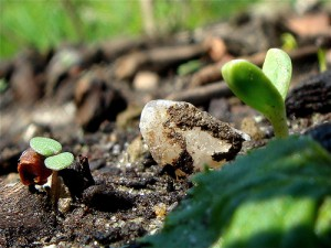 How To Raise Annuals, Biennials and Perennials from Seed