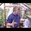 The basic rules of greenhouse gardening