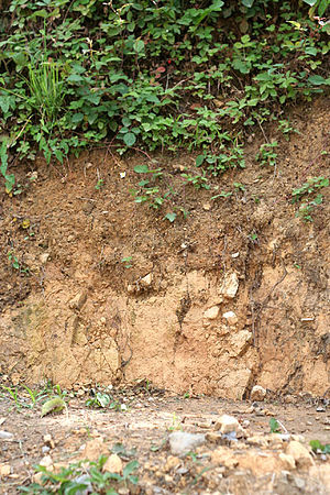 An example of clay soil.
